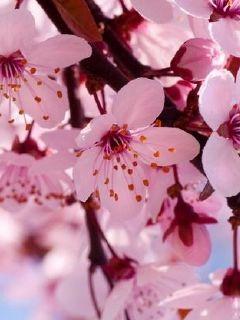 永恒之花是爱情