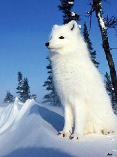 云梦泽之狐