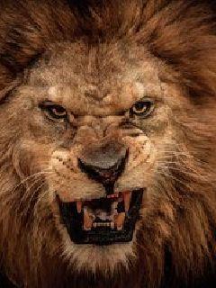 野兽物语之草原之王