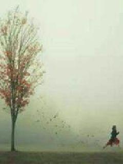 枫叶的一生