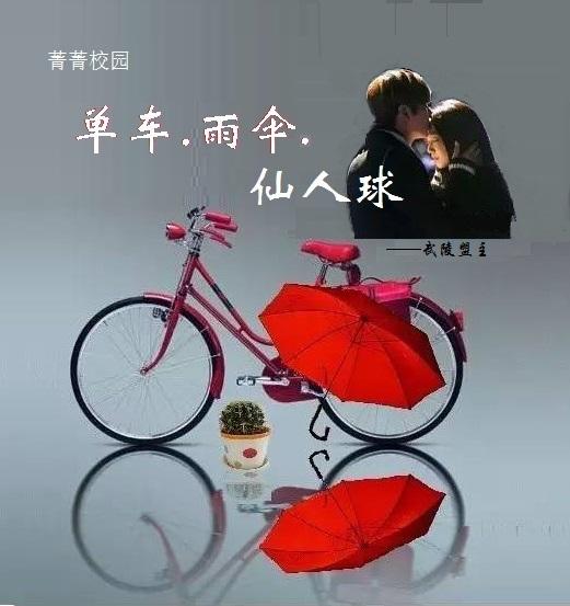 单车雨伞仙人球