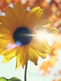 背着太阳的光