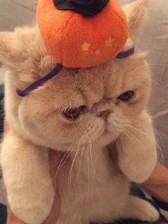 窗台上的加菲猫