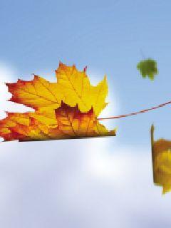 落叶的归程