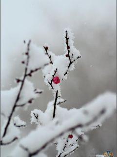 终极一班之傲雪寒梅