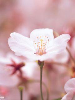 花开唯一春